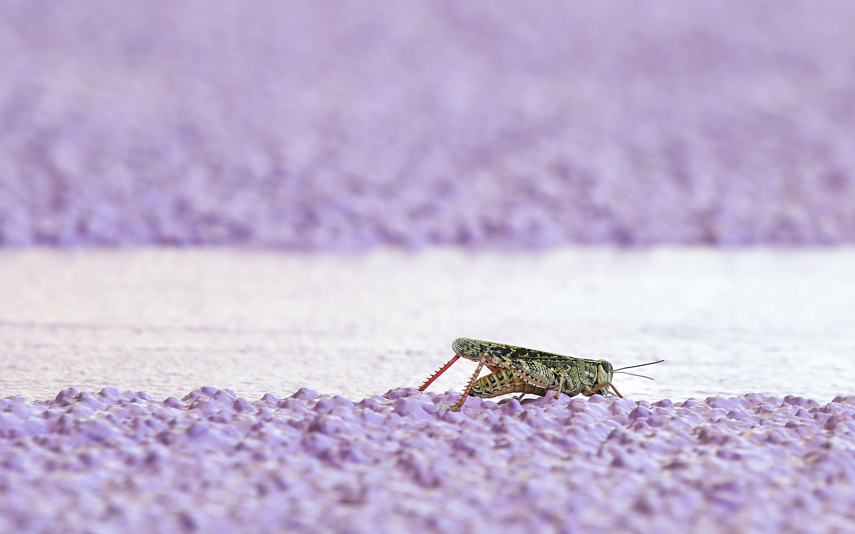 DARBORD-Unusual-grasshopper